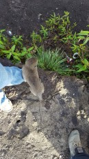 I've heard of a monkey on your back. I had a monkey on my foot